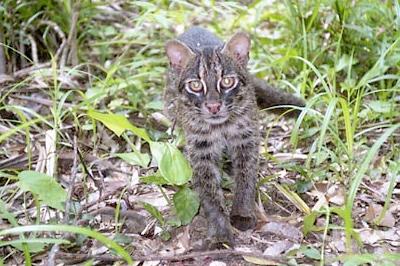 Кошка Иримото фото