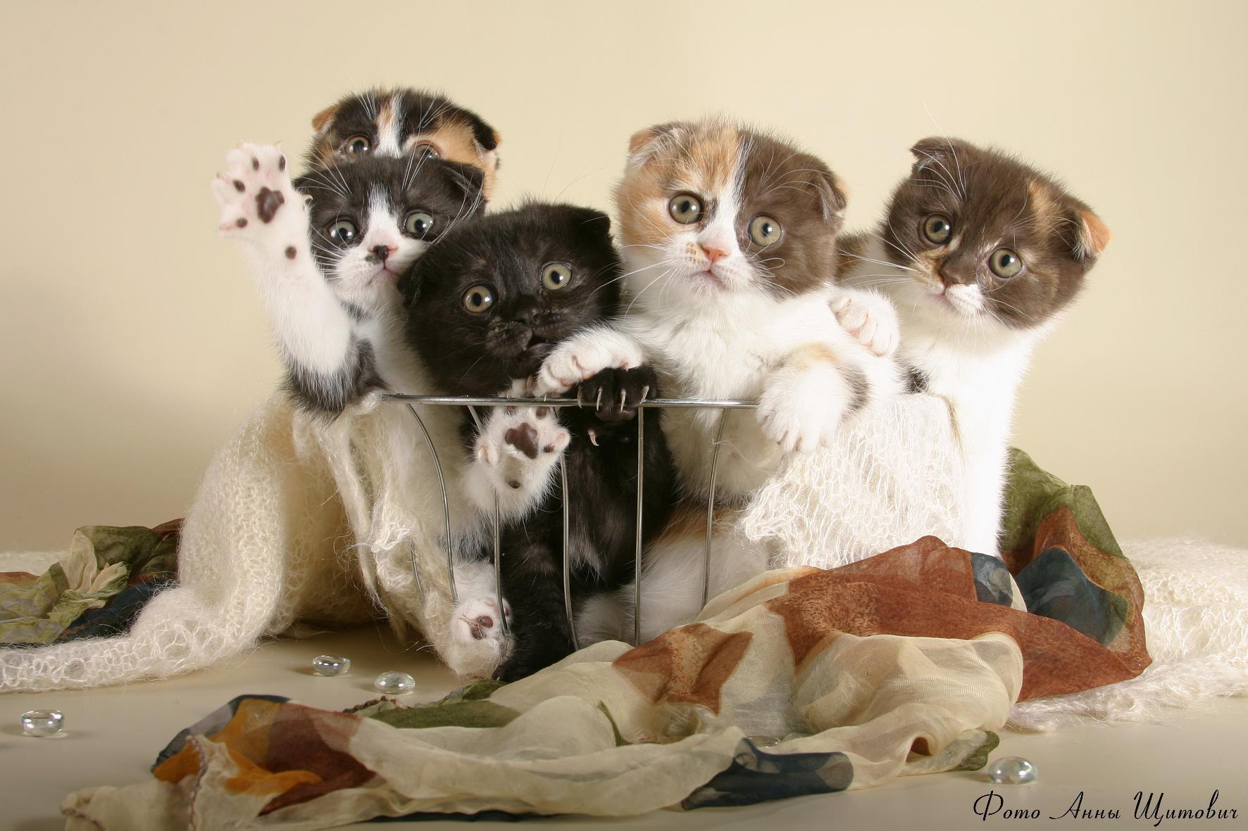 стандартных ключах картинки с кошками и котятами прикольные смесь газов именно
