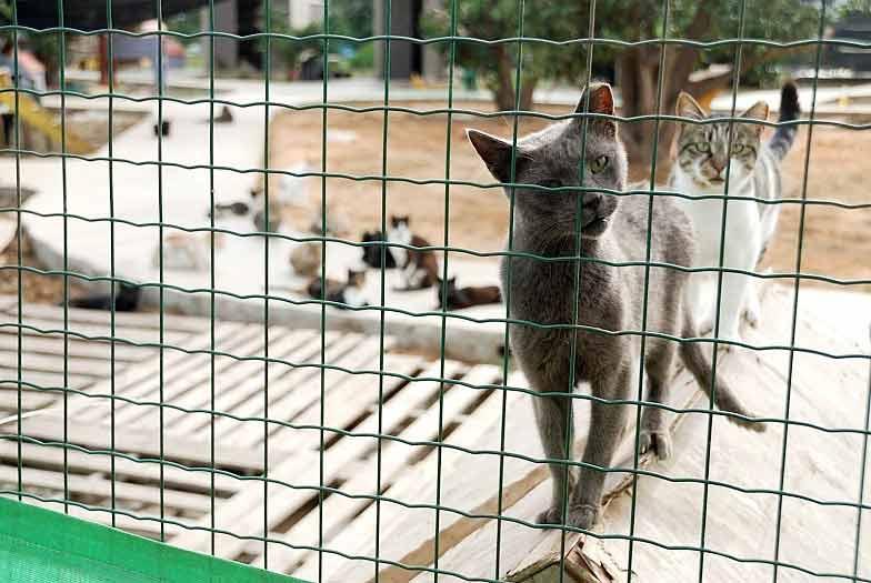 Как открыть питомник для животных фото