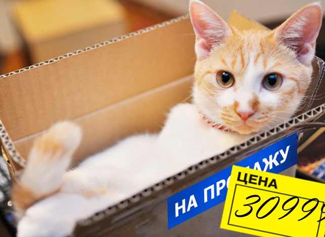Разведение кошек как бизнес фото