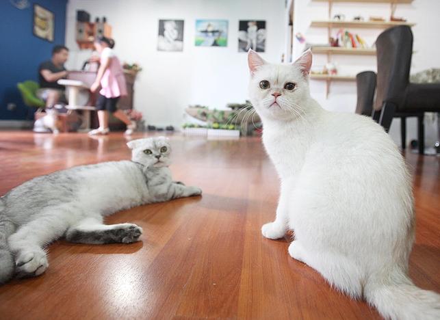 Котобизнес: как на основе ветеринарных клиник создать необычный проект фото