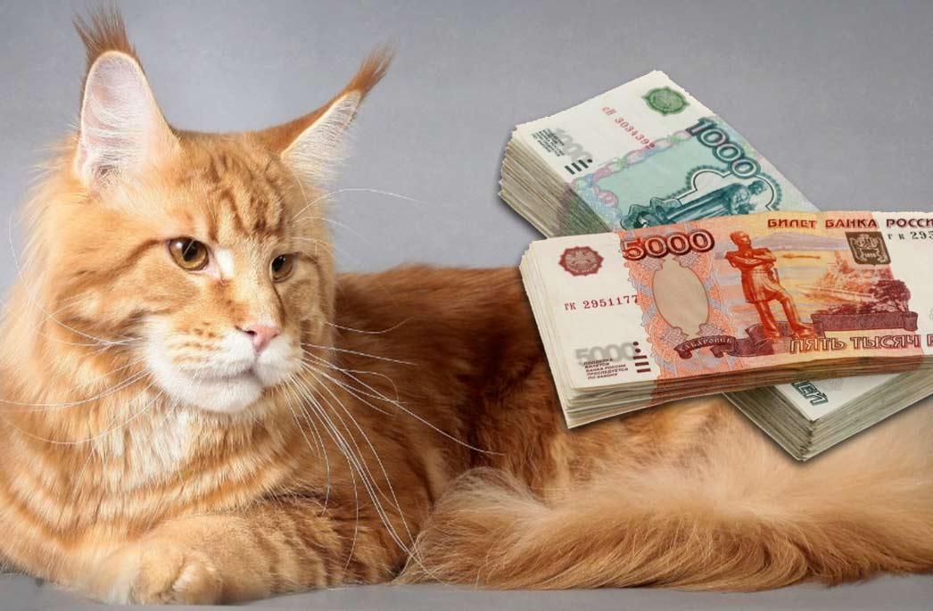 Сколько можно заработать на разведении породистых кошек в России фото