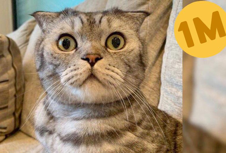 Как заработать миллион, если ты кот фото