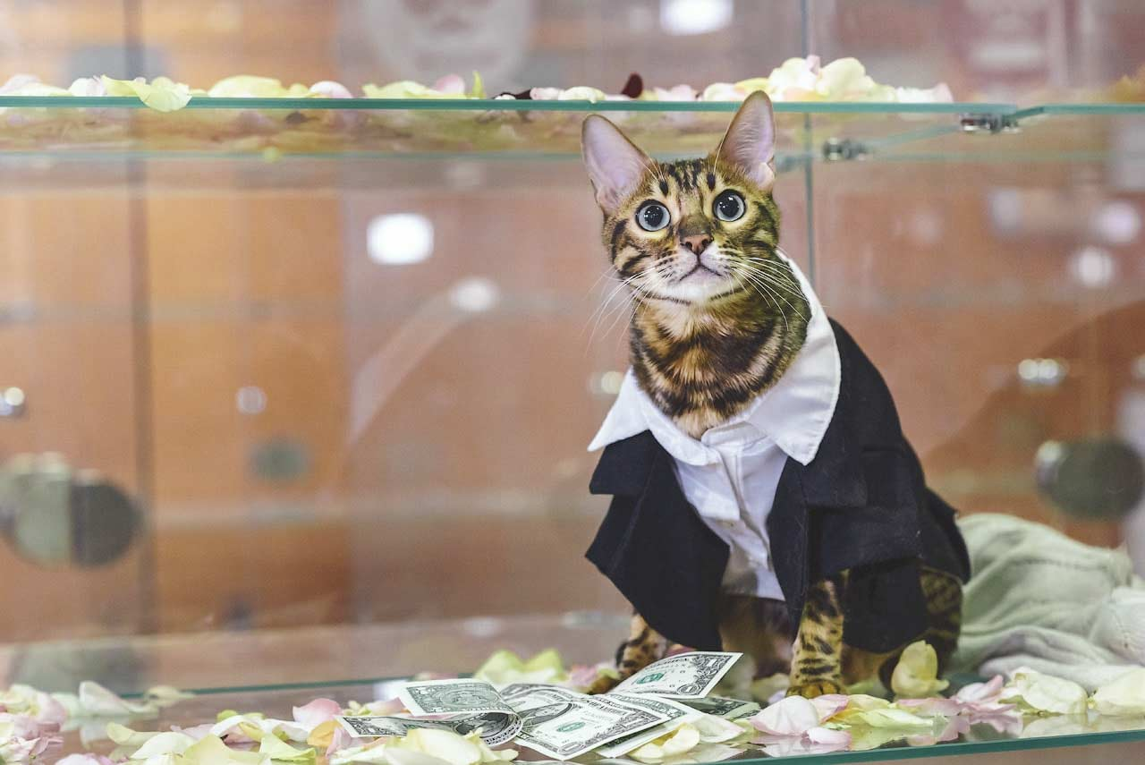 Обычная москвичка создала самую большую в мире сеть отелей для кошек. Без кредитов, без взяток, без «лапы». Боялась, но смогла фото