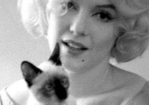 Мэрилин Монро с кошками фото