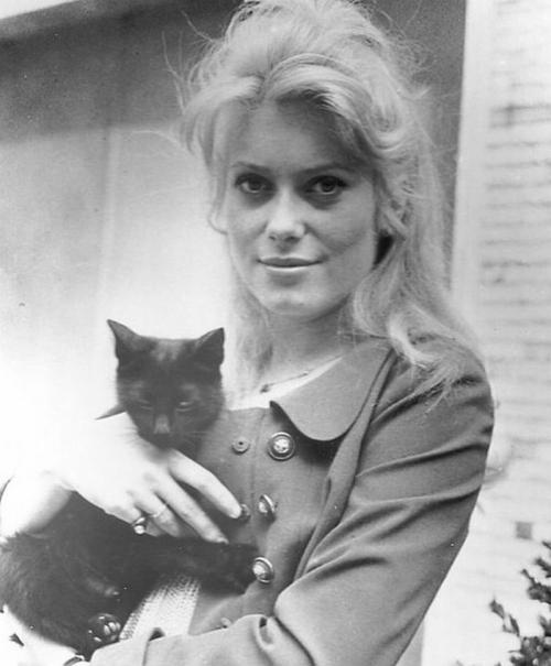 Катрин Денёв и кошки фото