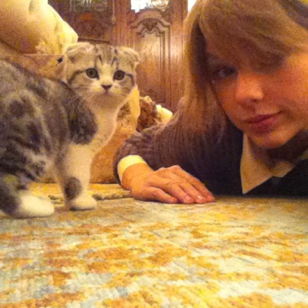 Тейлор Свифт и её кошки фото