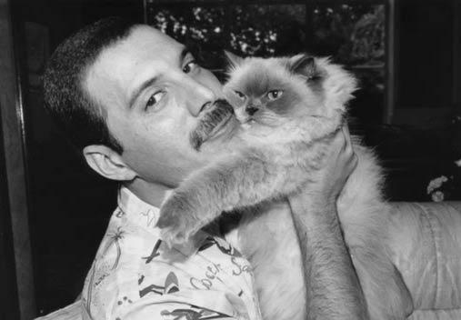 Фредди Меркьюри и кошка Делайла фото