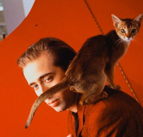 Николас Кейдж и кот Льюис фото