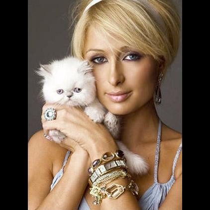 Пэрис Хилтон и её кошки фото