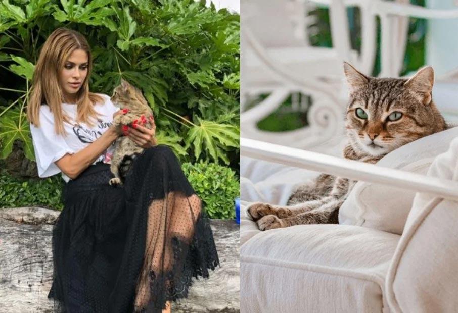 Виктория Боняи и кот Шумахер фото