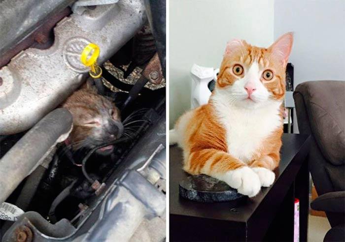 Подборка фотографий спасенных кошек фото