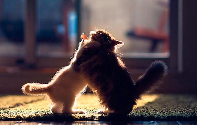 Пушистые друзья – Дейзи и Ханна фото