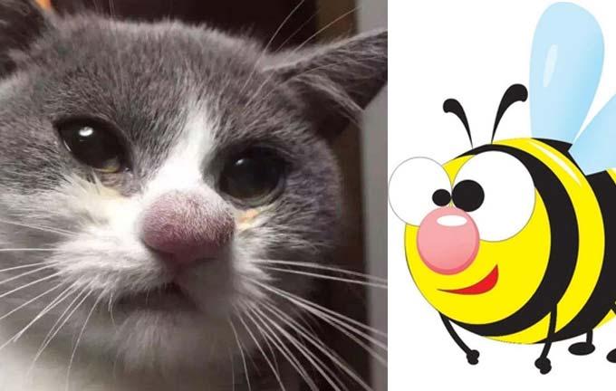 Смешные коты укушенные пчелами (видео) фото