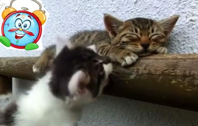 Два чудесных пушистика в попытках разбудить спящего собрата (видео) фото