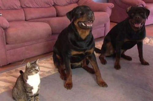 Третьим будешь? Эта кошка думает, что она собака. ВИДЕО фото