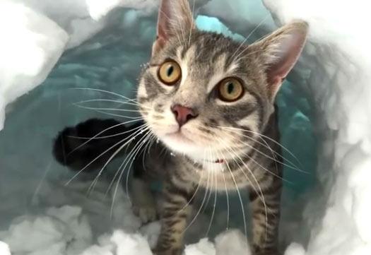 Кот вырыл себе нору в снегу и сидит в ней фото