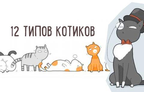 12 типов котов: найдите среди них свое чудо фото