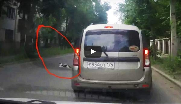 Кошка спровоцировала аварию и скрылась с места преступления фото
