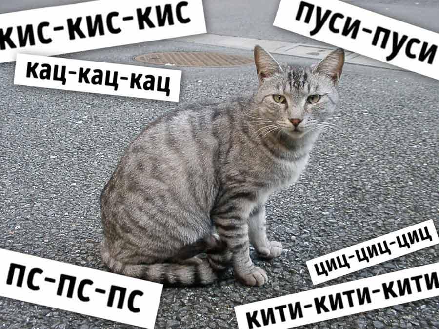 Как в разных странах подзывают кошек фото