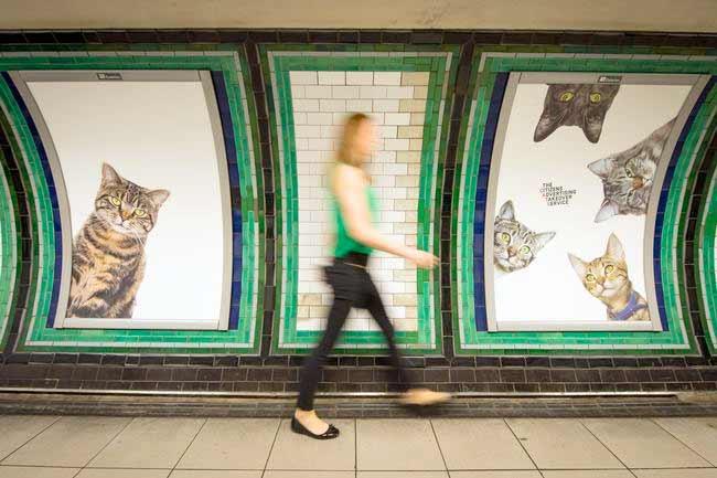 В Британии появилась необычная реклама в метро, на которой одни только кошки фото