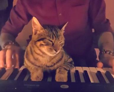 Кот из Турции покорил пользователей Instagram любовью к музыке фото