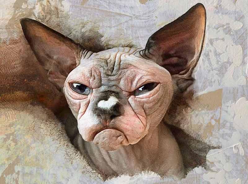 Самый злобный кот завел свой Instagram фото