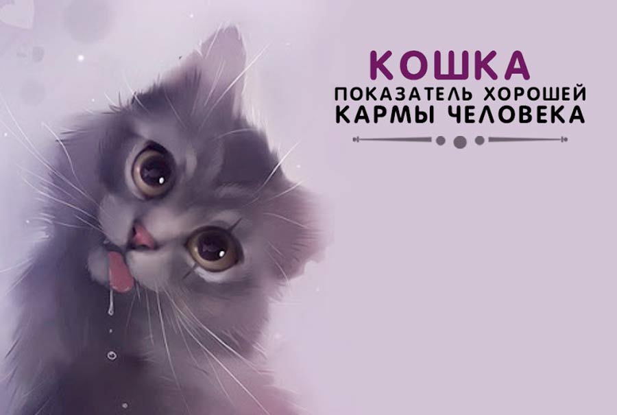 Кошка — показатель хорошей кармы человека фото