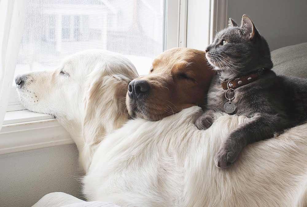 Две собаки и кот — три лучших друга, которые всё делают вместе фото