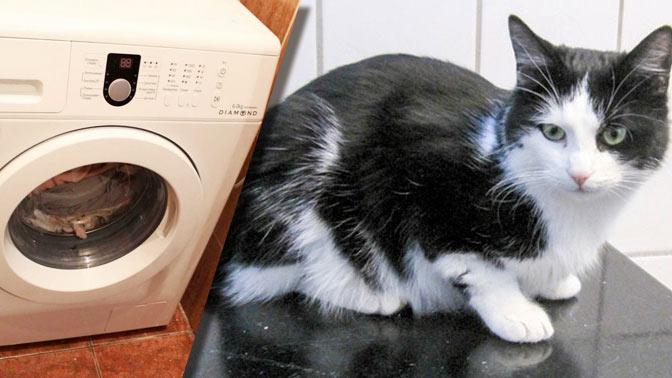 В Норвегии кот провел 40 минут в работающей стиральной машине и выжил фото