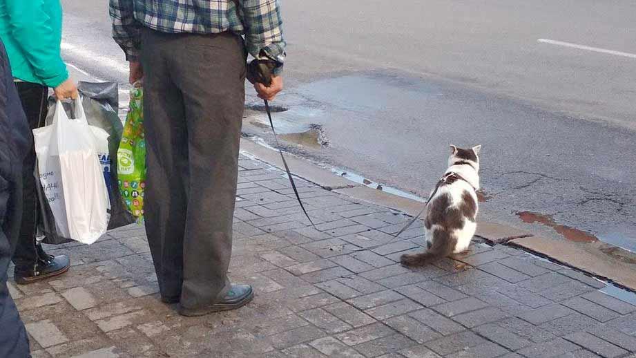 Дрессированный кот Лева восхитил пользователей Сети фото
