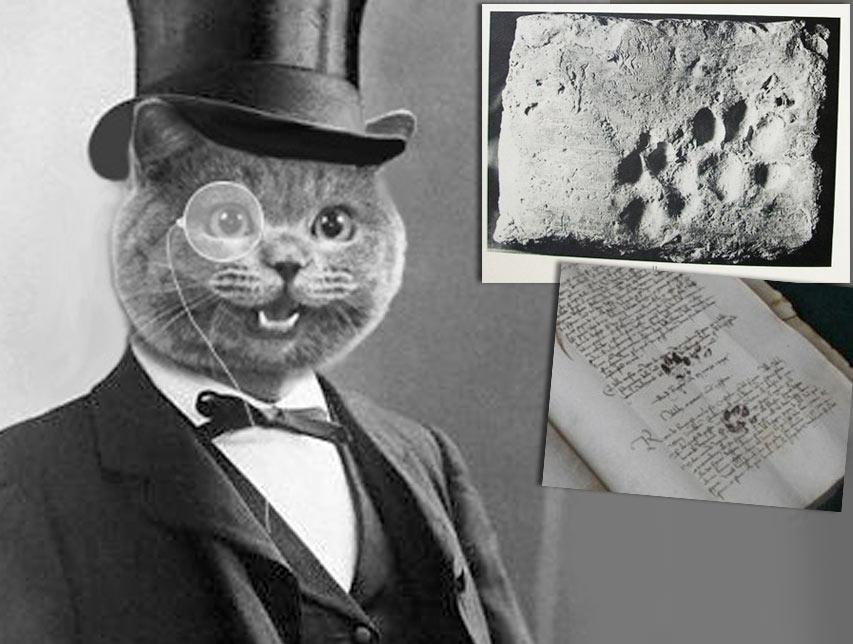 Как кошки оставили свой след в истории фото