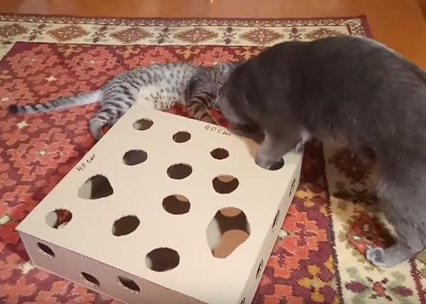 Прикольная игрушка для кошек своими руками фото