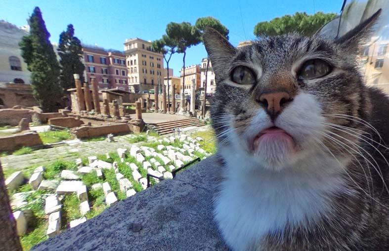Раздраженная кошка на панораме Google стала звездой фото