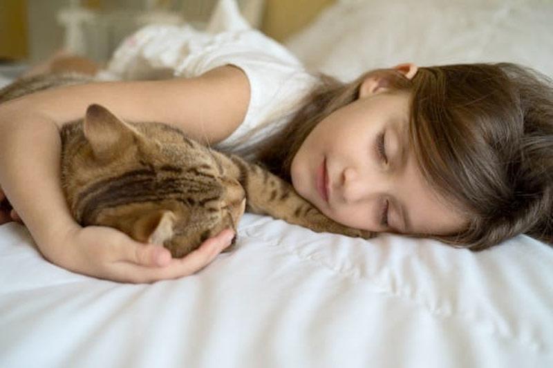 Ученые объяснили, почему полезно брать кота или кошку  в постель фото