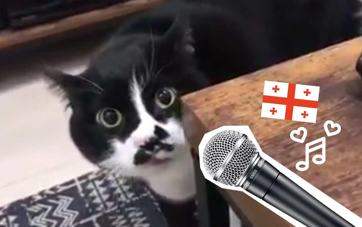 Кот виртуозно исполняет грузинские песни фото