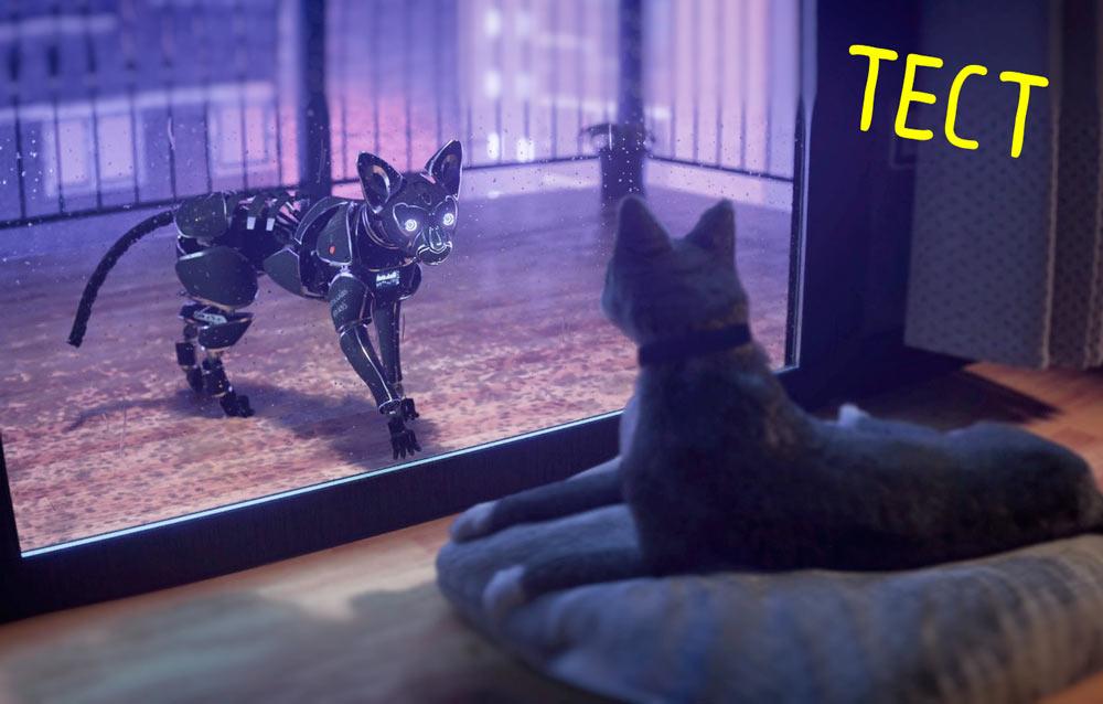 Тест, который поможет разобраться, какая кошка вам подходит фото