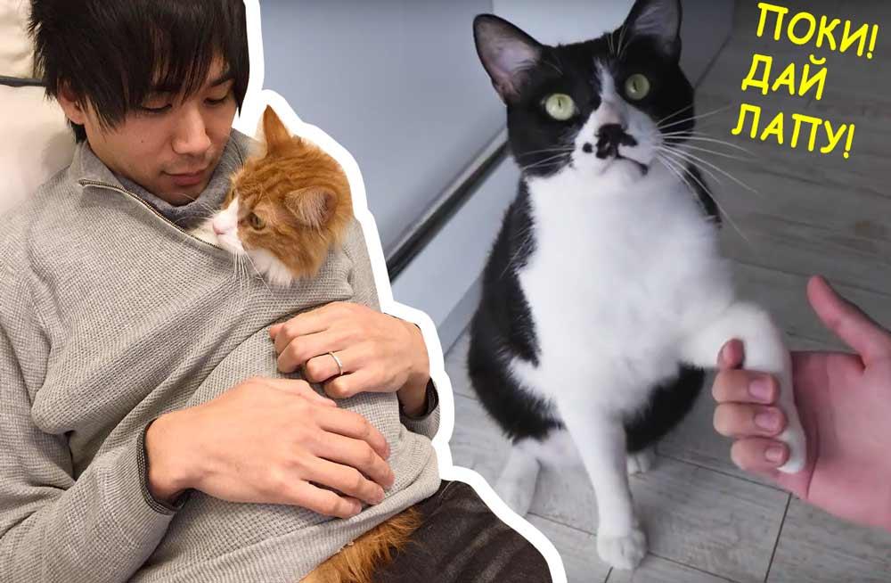 Популярный блогер JunsKitchen рассказал как дрессирует своих котов фото