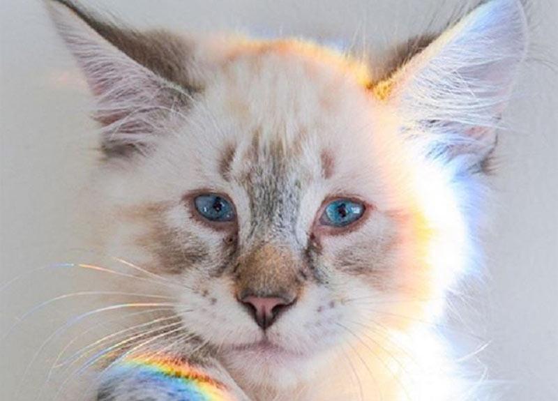 Синеглазый котенок оказался «особенным», но хозяйка заметила еще одну деталь, о которой не знали волонтеры фото