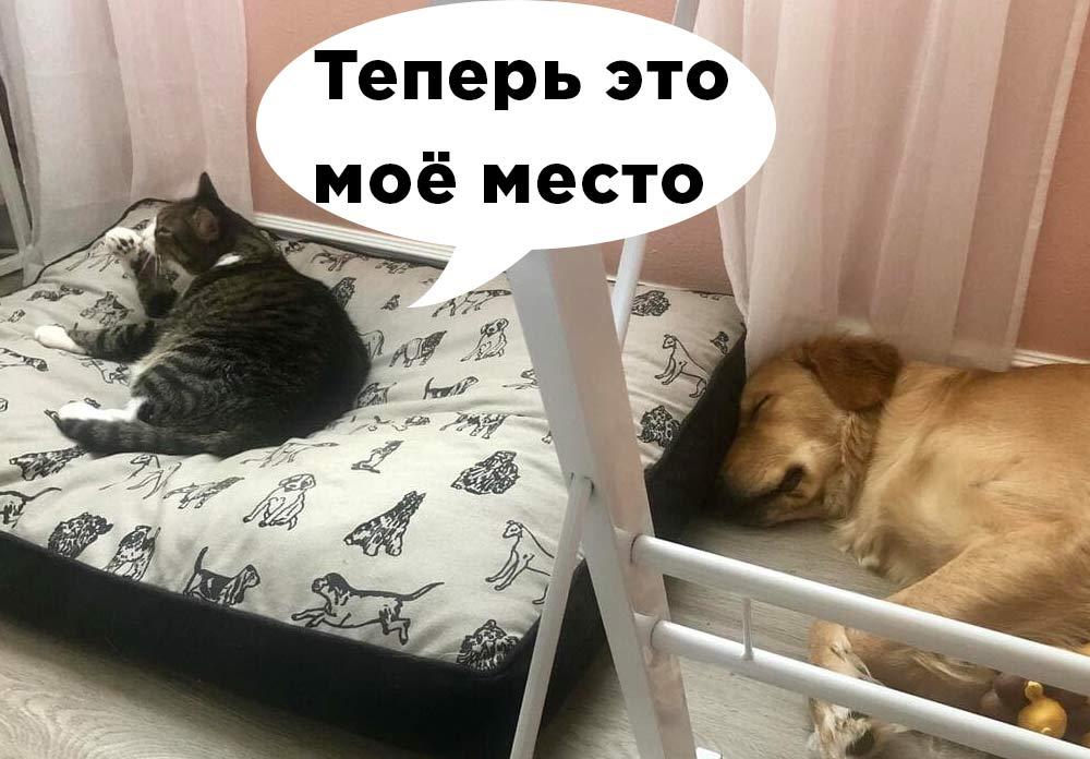 Теперь это моё место. Кошки, которые прогнали собак и заняли их лежанки фото