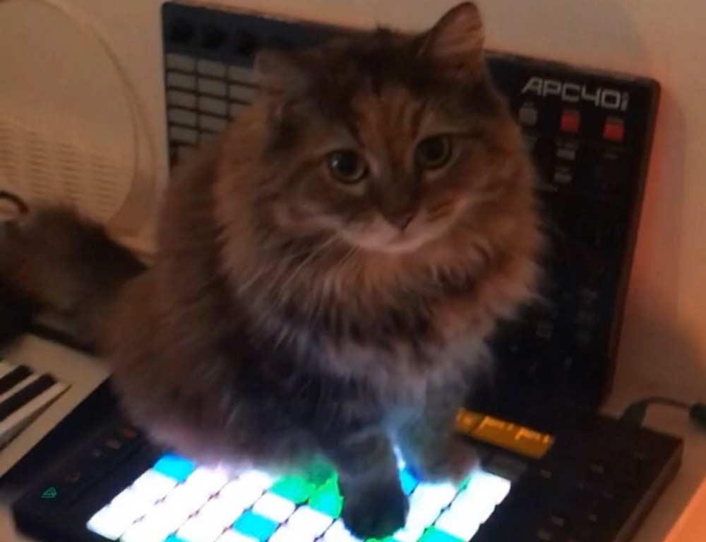 Кошка-композитор лучше всех сочиняет электронную музыку фото