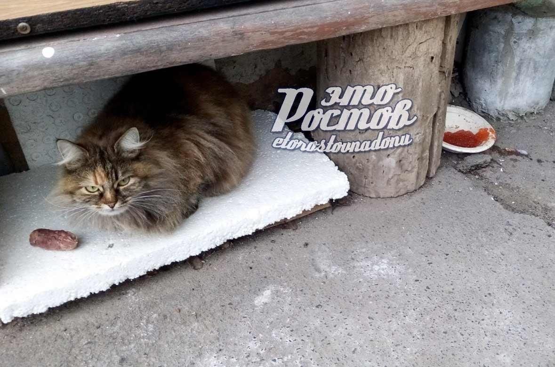 Отказывающийся от красной икры бездомный кот рассмешил ростовчан фото