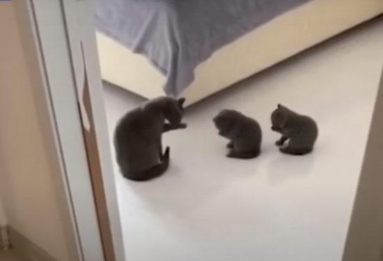 Как это мило: кошка учит котят умываться фото