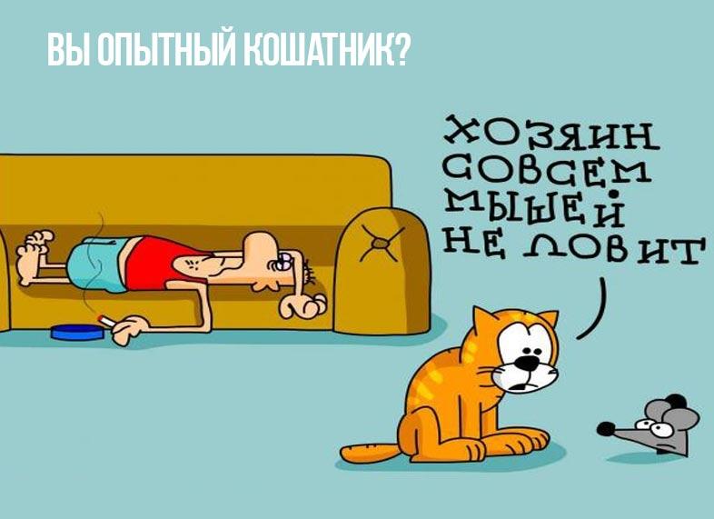 Книга Елены Филипповой «С точки зрения кошки» фото