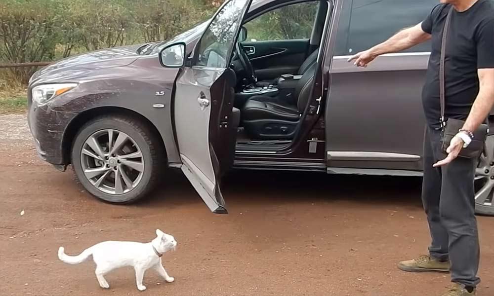 Можно ли кота приучить ездить в автомобиле? фото