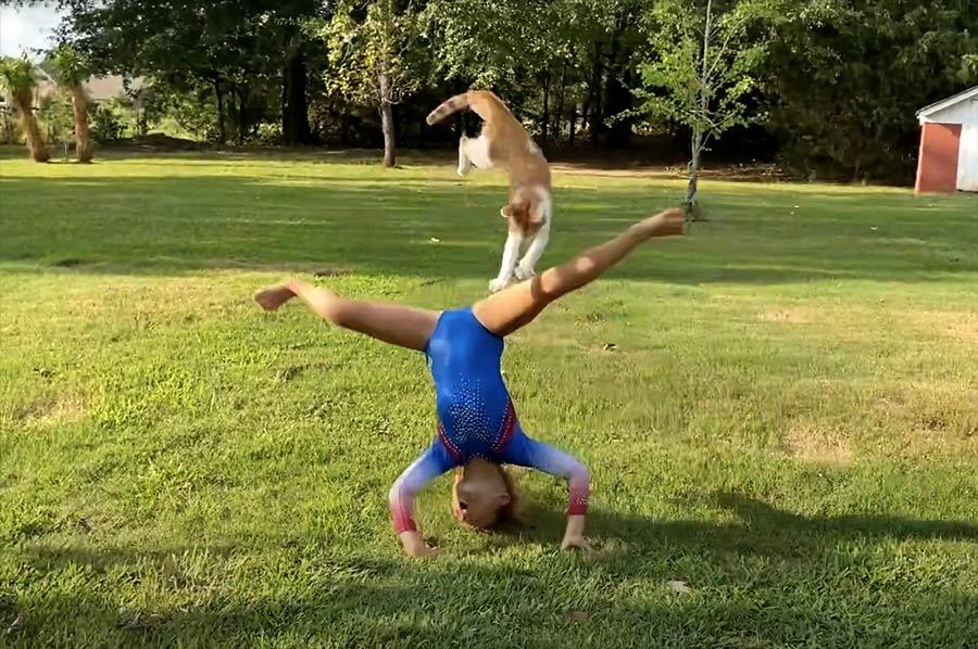 Кот испортил выступление юной гимнастки и прославил ее в Сети фото