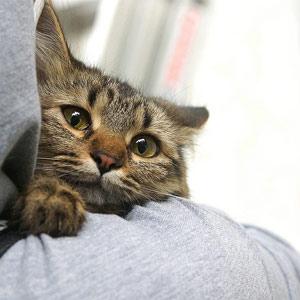 Кошка беспородная песня фото