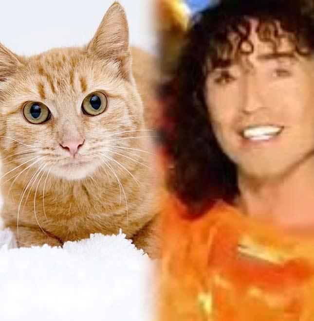 Валерий Леонтьев - Рыжий кот фото