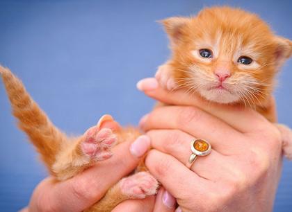 Как правильно купить котенка в питомнике фото