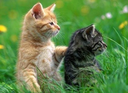Кот или кошка. Кого выбрать? фото